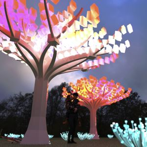 Entwined light display in Golden Gate Park