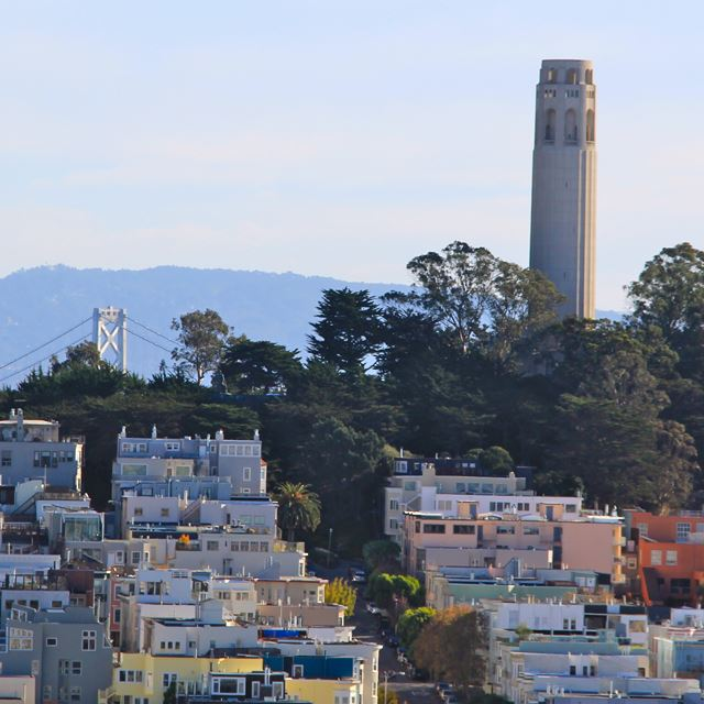 Coit Tower visible above the trees