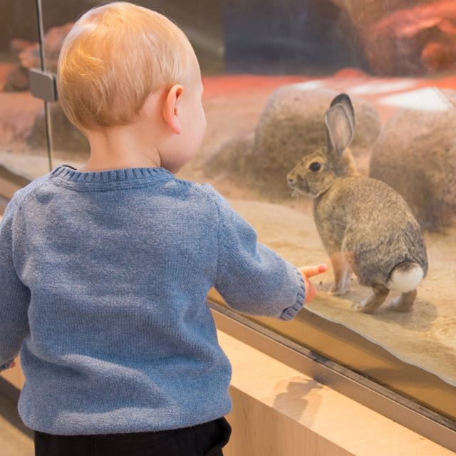 Little boy looking at a rabbit