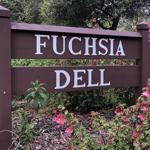Fuchsia Dell sign