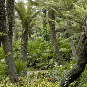 tree fern dell