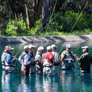 Group of fly fishers in the water